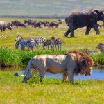 Een reis naar Tanzania