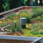 Groen dak, een goed idee voor huiseigenaren
