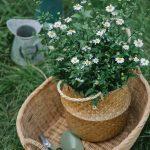 Wat heb je nodig voor groenonderhoud?